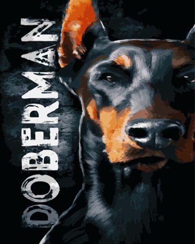 Картина по номерам 40x50 Доберман - хороший охранник